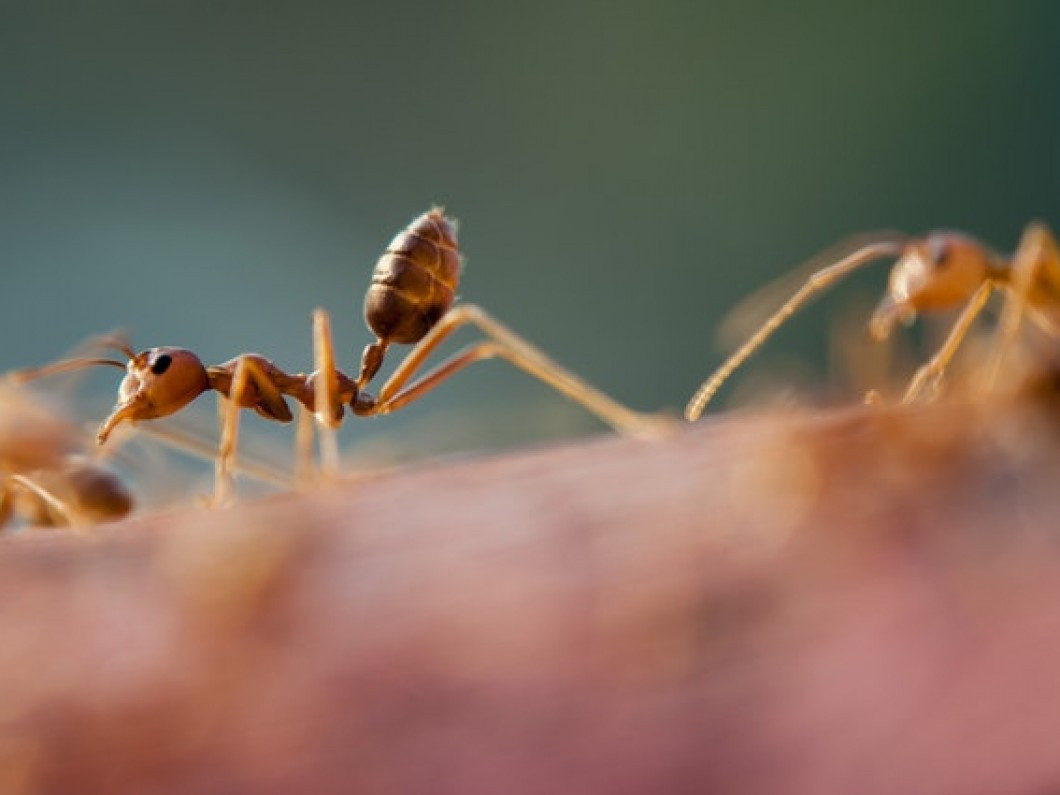 Don't let your property fall victim to a colony of red fire ants